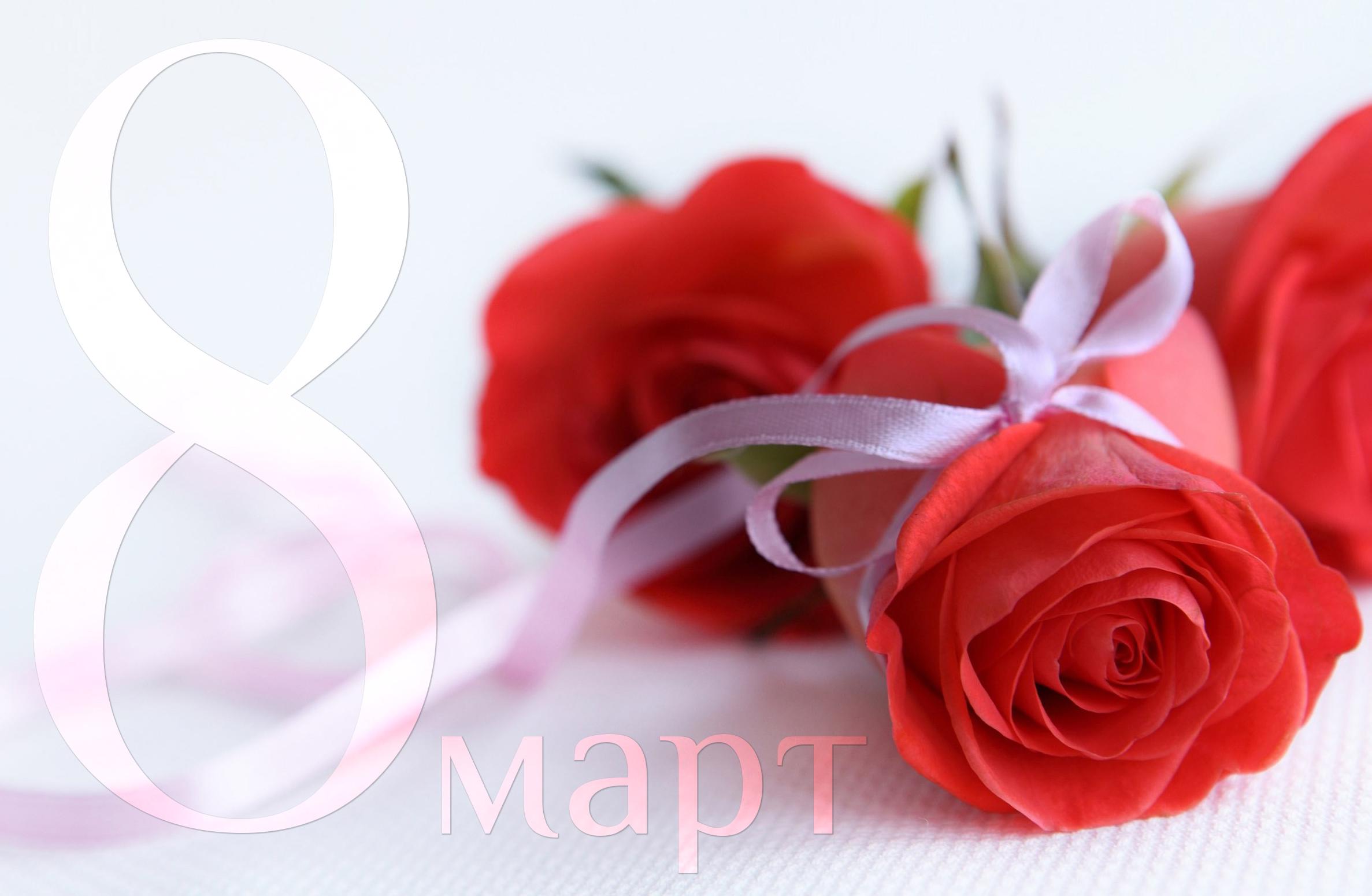 red-rose-wallpaper-pc-7